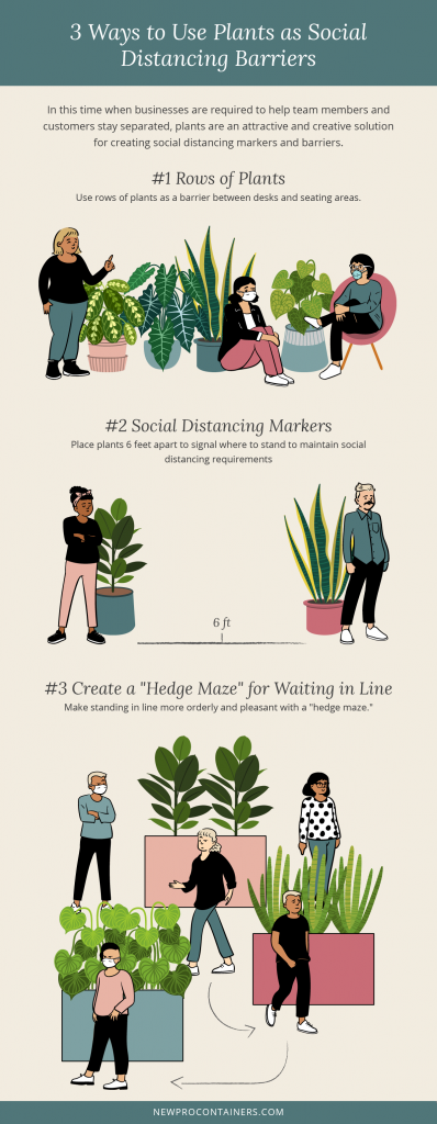ways to use plants as social distancing barriers