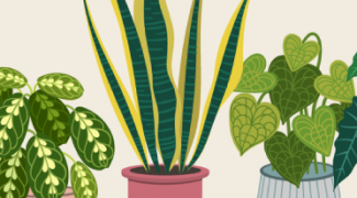 3 Ways to Use Plants as Social Distancing Barriers [Infographic] Featured Image