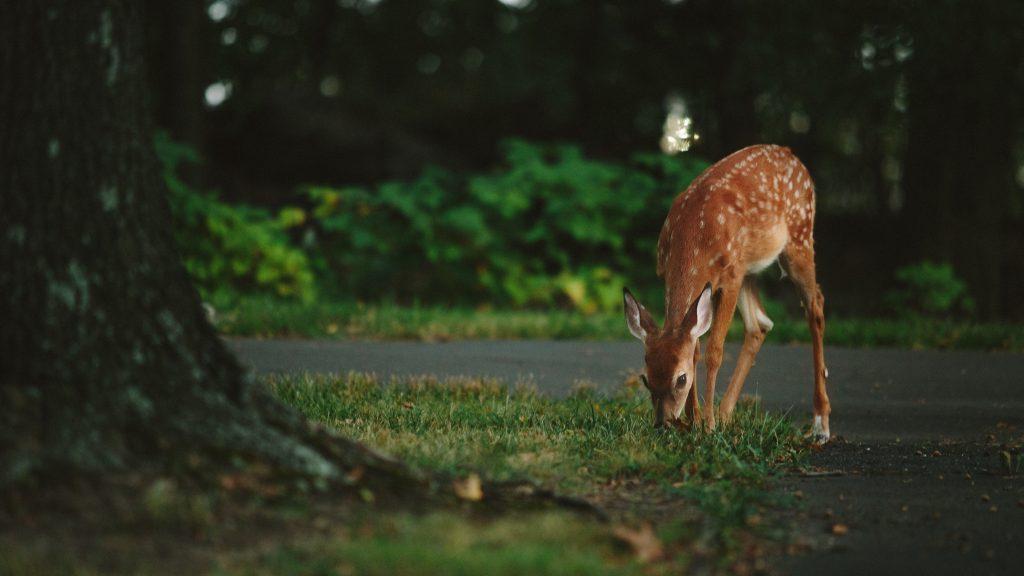 plant boarding deer