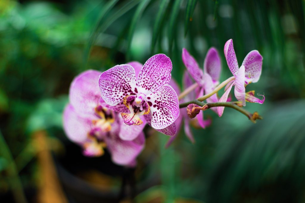 plant boarding orchid