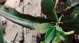 Blessings in Disguise: Why Plant Mishaps Can be a Good Thing Featured Image