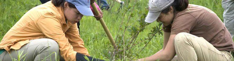 community service planting trees