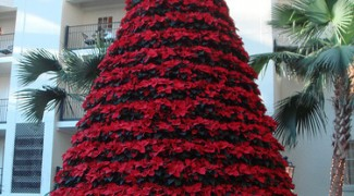4 Ways to Extend Your First Poinsettia Installation to New Year's Day Featured Image