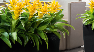3 Terrible Places to Put Indoor Plants Featured Image