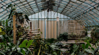 Should You Grow Your Own Tropical Plants in a Greenhouse? Featured Image