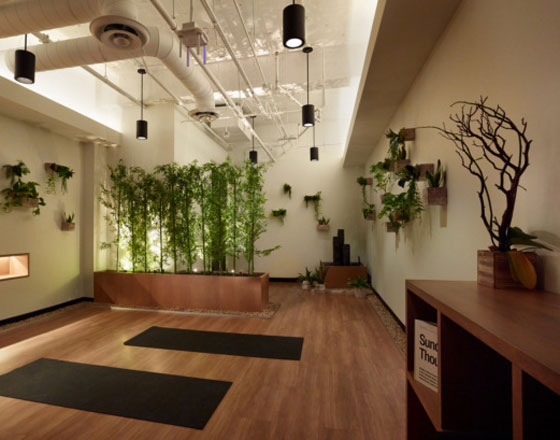 open yoga room with black yoga mats, hanging plants and a bamboo plant divider