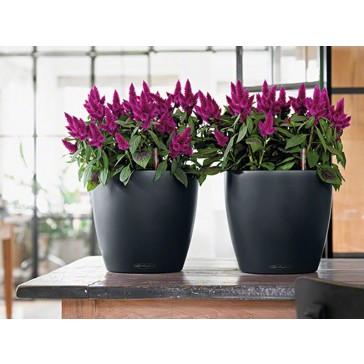 Lechuza Classico Color-Molded Planter