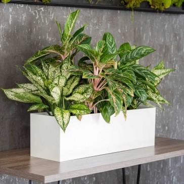 PotLuck Color-Molded Rectangle Planter