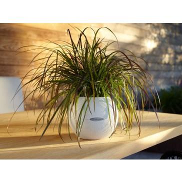 Puro Cottage Patio Planter