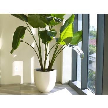 Valencia Tapered Round Fiberglass Planter