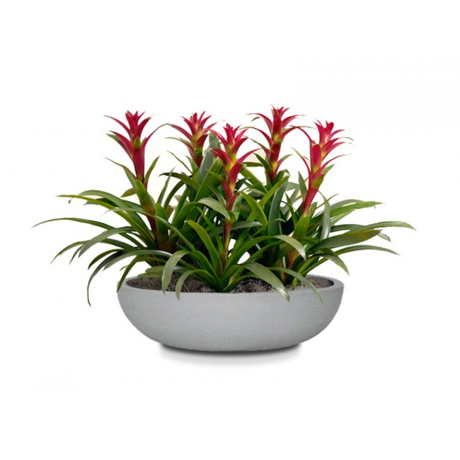 CurbSide Table Top Bowl Planter. Zoom
