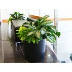 PotLuck Color-Molded Floor Planter
