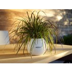 Puro Cottage Patio Planter