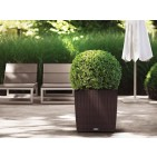 Lechuza Square Cottage Patio Planter