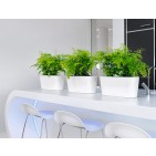 Lechuza Self-Watering Windowsill Planter