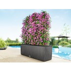 Lechuza Trio Cottage Patio Planter