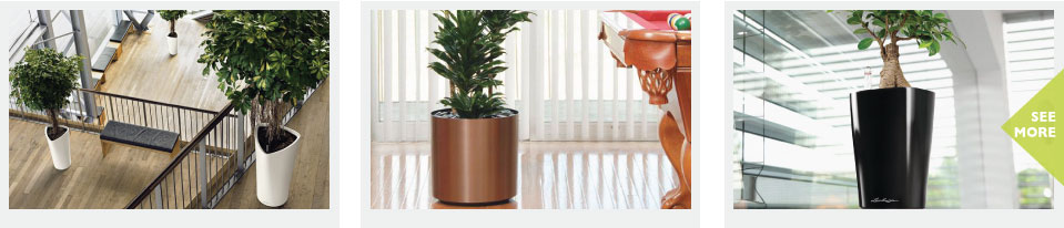 Commercial Indoor Planters